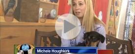 Shelter Me: West Jersey Volunteer for Animals