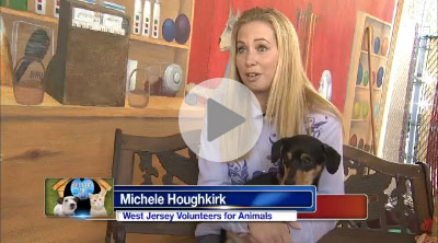 Shelter Me: West Jersey Volunteer for Animals