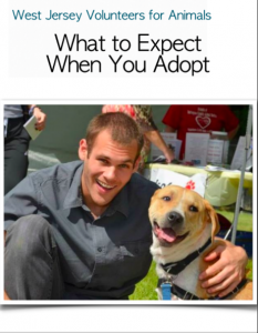 What to Expect When You Adopt