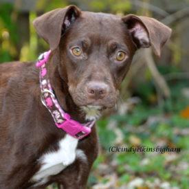 Calli- Isn't she lovely!